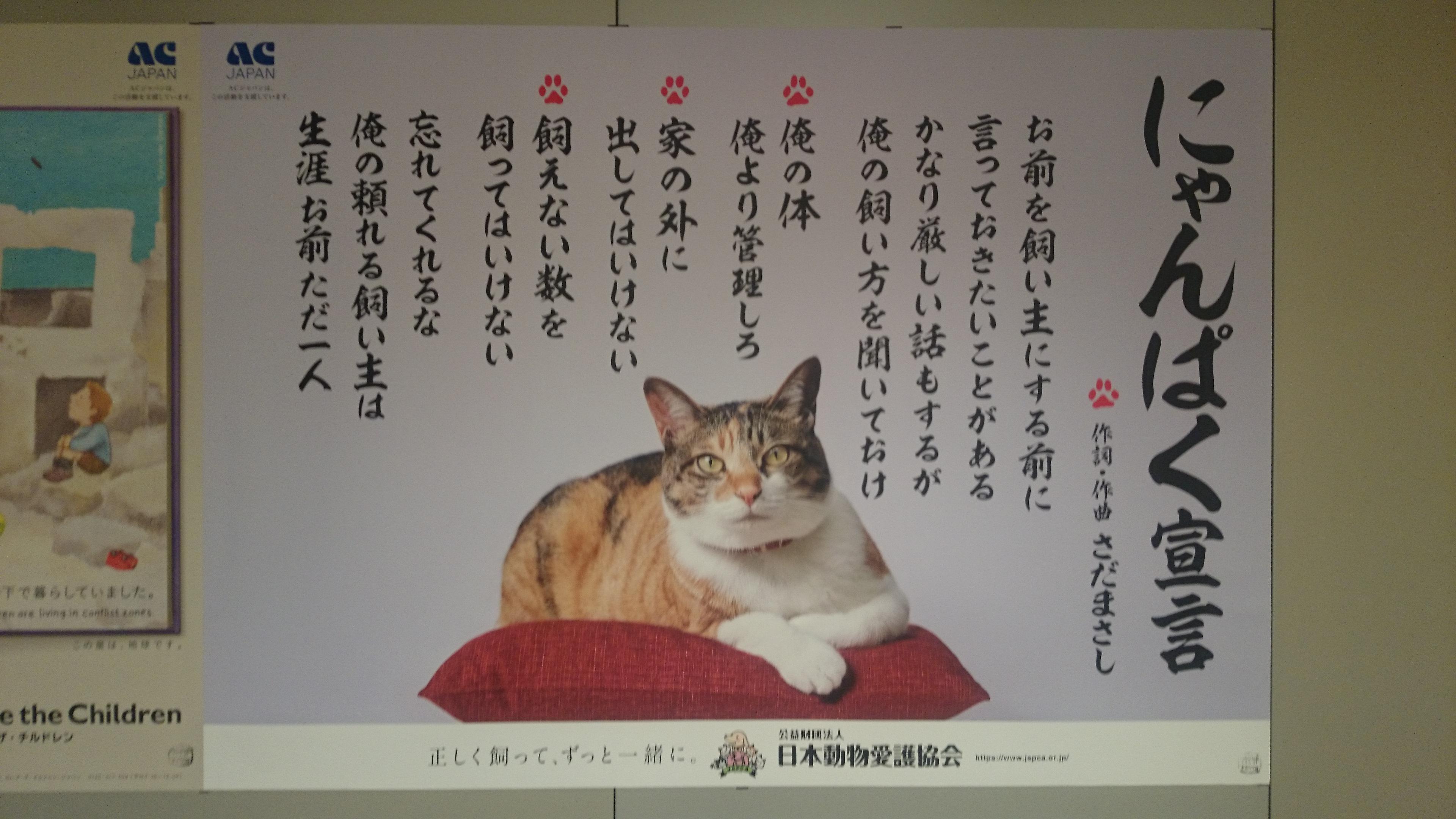 宣言 歌詞 ぱく にゃん